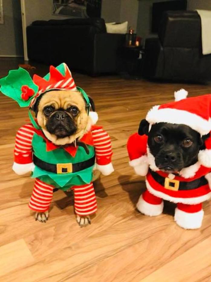 Dogs Christmas Party