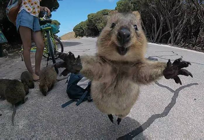 Rottnest Island Nature Play Day