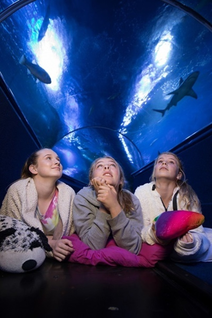 Shark Sleepovers at AQWA