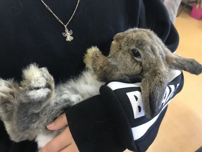 WARCI Vaccination Day and Rabbit Show
